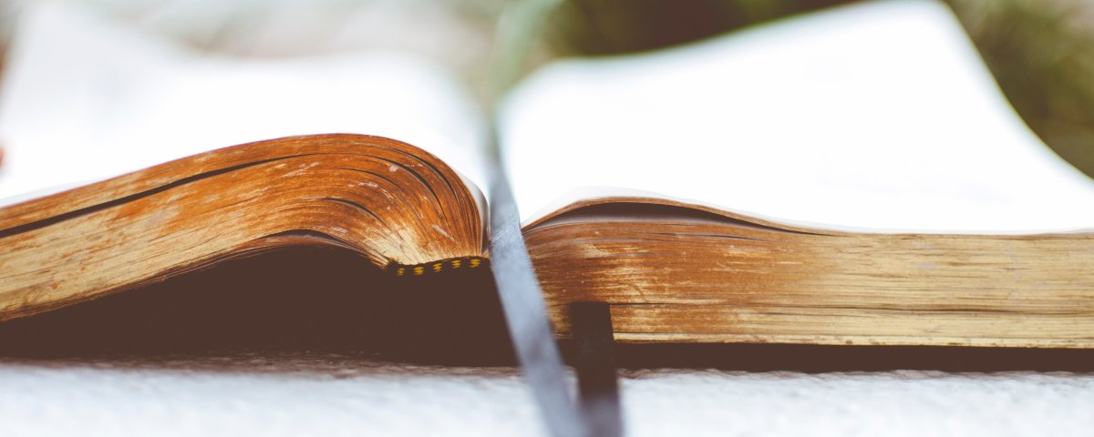 Bible and plant