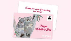 Wildcards_paid_social_landscape_koalas